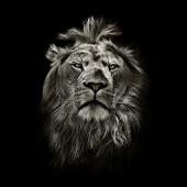 Lion King CM Locker Theme APK for Bluestacks