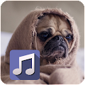 App My photo music player apk for kindle fire