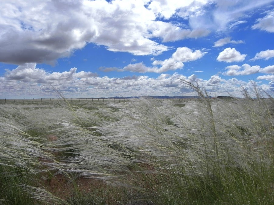 Windswept by Rebecca Imwalle - Landscapes Prairies, Meadows & Fields ( field, sky, africa )