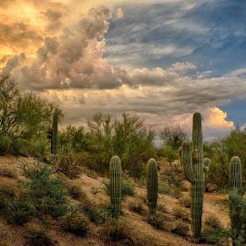 Diagonal Storm by Charlie Alolkoy - Landscapes Deserts ( desert, sunset, arizona, tucson, weather, sunrise, storm, cactus )
