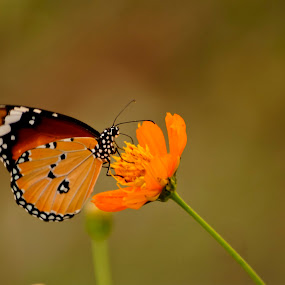 by Vyom Saxena - Animals Insects & Spiders