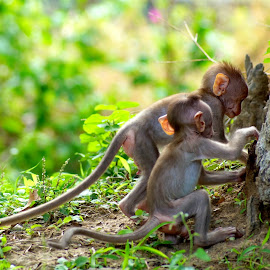 Baby monkeys  by Shalini Jai - Novices Only Wildlife