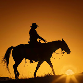 COWGIRL SUNSET by Susan Byrd - Animals Horses
