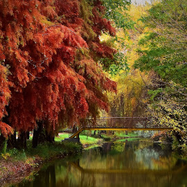 Autumn... by Radita Watkinson - City,  Street & Park  City Parks ( park, autumn, trees, lake, bridge )