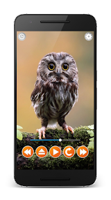 Birds Sounds Relax and Sleep Apk Download Free for PC, smart TV