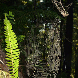 Oh the webs we weave by Kimberly Morehouse - Nature Up Close Webs