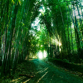 Bamboo forest by Cristobal Garciaferro Rubio - Landscapes Forests ( bamboo, sunrays, forest, road, sun )