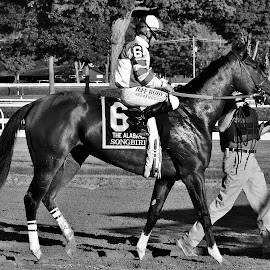 Undefeated Songbird Entering the Gate by Monroe Phillips - Black & White Sports (  )