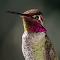 Humming Bird 26 02 18.jpg