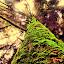 Lava by Jhilam Deb - Nature Up Close Trees & Bushes ( north bengal, lava, plants, trees,  )