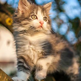 Kika on cherry tree by Mario Novak - Animals - Cats Playing