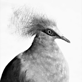 by Koh Chip Whye - Black & White Animals