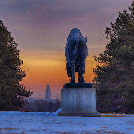 Staring at State Capital by Eric Wellman - Buildings & Architecture Statues & Monuments ( statue, park, sunrise, capital )