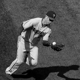 Joe Mauer by Michael Lemm - Sports & Fitness Baseball