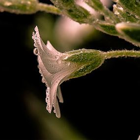 Life by Ivan Bertusi - Nature Up Close Other Natural Objects (  )
