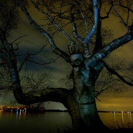I'm watching you humans!!! by Mario Monast - Nature Up Close Trees & Bushes ( eerie, hdr, waterscape, colorful, colors, nightscape, fantasy, nature, night photography, stars, nighttime, trees, nature up close, night, night shot )