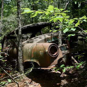 Old Dead Car by Bill Bettilyon - Landscapes Forests ( providence canyon state park, forest, antique car )