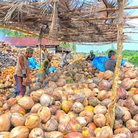 by Daenk Andi - Professional People Technology Workers ( potret kerja, pekerja, teknologi tradisional, tradisional, petani, kelapa, lelaki, teknologi, orang orang, alam, pria, buruh )