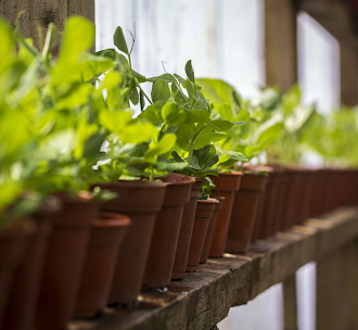 Growing plants at Mares Farm, Old Amersham, Bucks