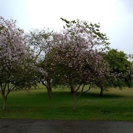 Parks by Kartik Sharma - City,  Street & Park  City Parks ( university, park, tree, pink, dehradun )