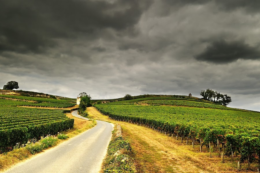 saint émillion by Marc Renaudin - Landscapes Prairies, Meadows & Fields ( paysage, nuage, nature, road, vigne )