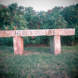 Here's to Life by Michelle Kelly - Novices Only Objects & Still Life