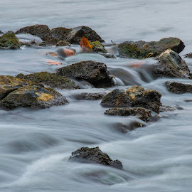 by Kevin Esterline - Nature Up Close Water ( rocks, fall, leaves, stream, river, water )