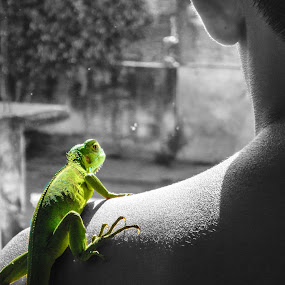 Observo desde adentro by Alighieri Rizo - Animals Reptiles ( ser, iguana, reptil, verde, observo, animal, motion, animals in motion, pwc76 )