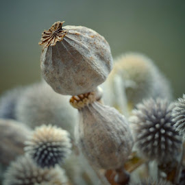 by Heather Aplin - Nature Up Close Other Natural Objects (  )