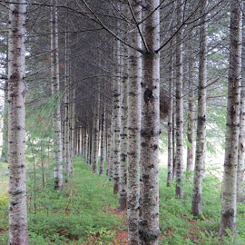 Planted With Love by Elizabeth Donovan-Jenkins - Nature Up Close Trees & Bushes ( nature, trees, forest, evergreen, fir,  )