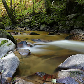 by Siniša Almaši - Nature Up Close Rock & Stone ( water, up close, stream, forest, landscape, woods, depth, nature, cascade, trees, view, stones, light, rocks, river )