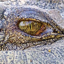 One Eye by Maria Bitunjac - Animals Reptiles