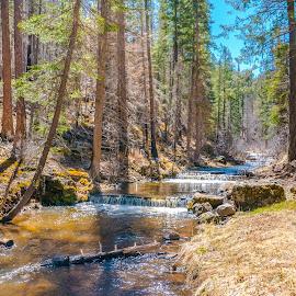 by Jon Davis - Landscapes Forests
