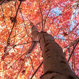 by Rajib Bahar - Nature Up Close Trees & Bushes