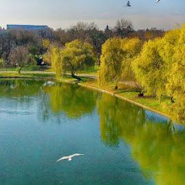 Stillness by Radu Eftimie - City,  Street & Park  City Parks ( bucharest, trees, lake, romania, city park, seaguls )