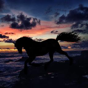by Giada Reccardini - Animals Horses ( pwcmovinganimals )