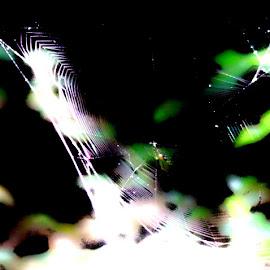 by Bob Wikert - Nature Up Close Webs