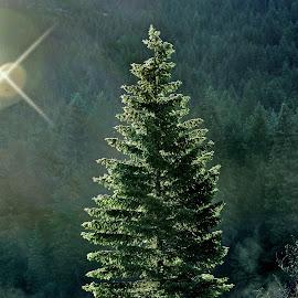 Burst of Sunlight by Twin Wranglers Baker - Nature Up Close Trees & Bushes ( sun light, forest, morning light, sunshine, tree,  )