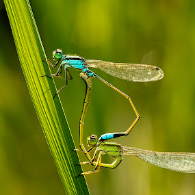 mating. by De Base - Animals Insects & Spiders