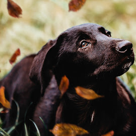 don't leave me here by Krisztina Ajtai - Animals - Dogs Portraits ( leaves, puppy, autumn, dog, cute, pet, photography,  )