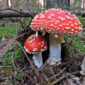 by Jana Kubínová - Nature Up Close Mushrooms & Fungi