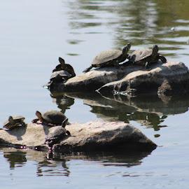 by Cassidy Bates - Animals Amphibians