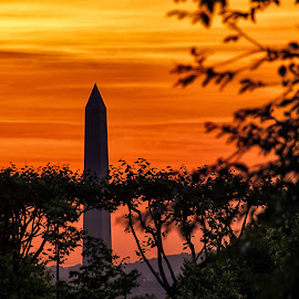Washington Memorial at Sunrise by Carol Ward - Buildings & Architecture Statues & Monuments ( arlington national cemetery, washington monument, monument, washington dc, sunrise )