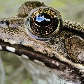 My good side  by Eric McAdams - Animals Amphibians ( animals, micro, frogs, amphibians, close up,  )