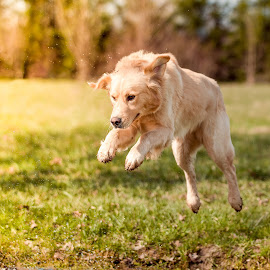 Jump by Michael Davor Carnier - Animals - Dogs Running ( dogs, dog, spring, running, jump )