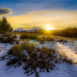 Soft winter sunshine by Shellie Littau - Landscapes Sunsets & Sunrises ( winter, warm, sunset, snow, light, rays )