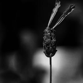 Rabbit  by Todd Reynolds - Black & White Flowers & Plants