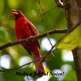Make A Joyful Noise by Lorna Littrell - Typography Captioned Photos ( bird, red bird, poster,  )