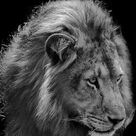The King (final)-3.jpg