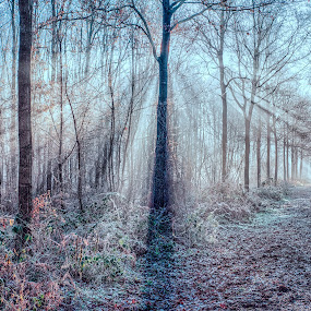 Bright Forest by Egon Zitter - Landscapes Forests ( winter, blue, bright, forest, woods, overexposed )